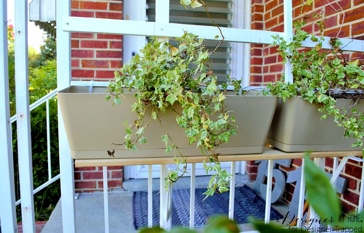 window box planter attched to porch railing doning english ivy for a charming cottage feel
