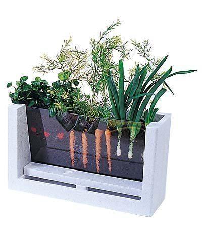 see through vegetable family
