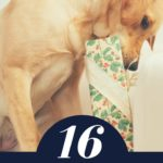 best gifts for pet lovers