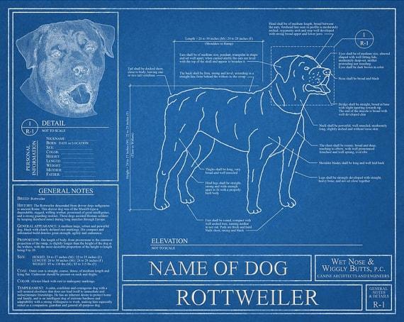 dog breed blueprint